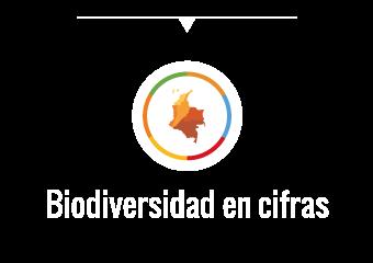bd-cifras-servicios